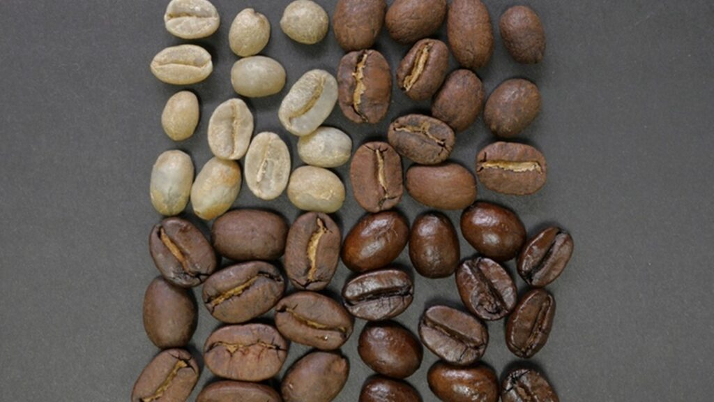 compostable coffee pods by Moving Beans