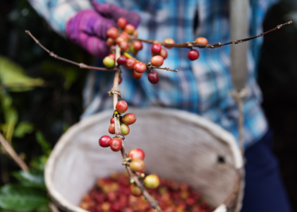 All About Fairtrade Coffee and Tea