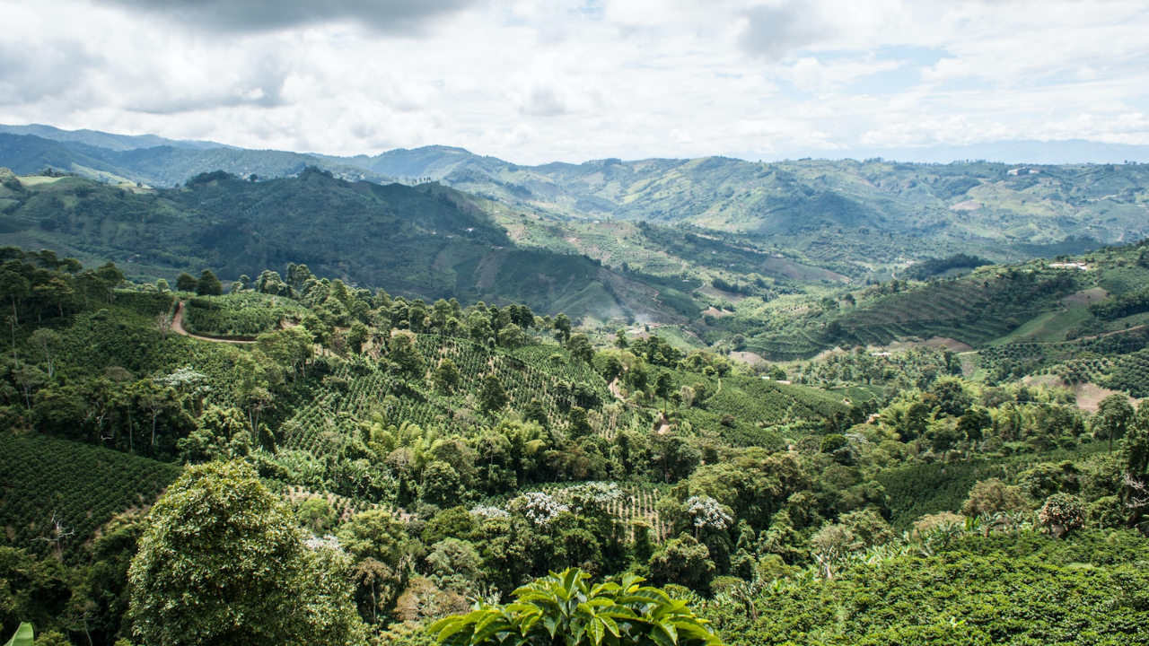 Around The World With Green Mountain Coffee